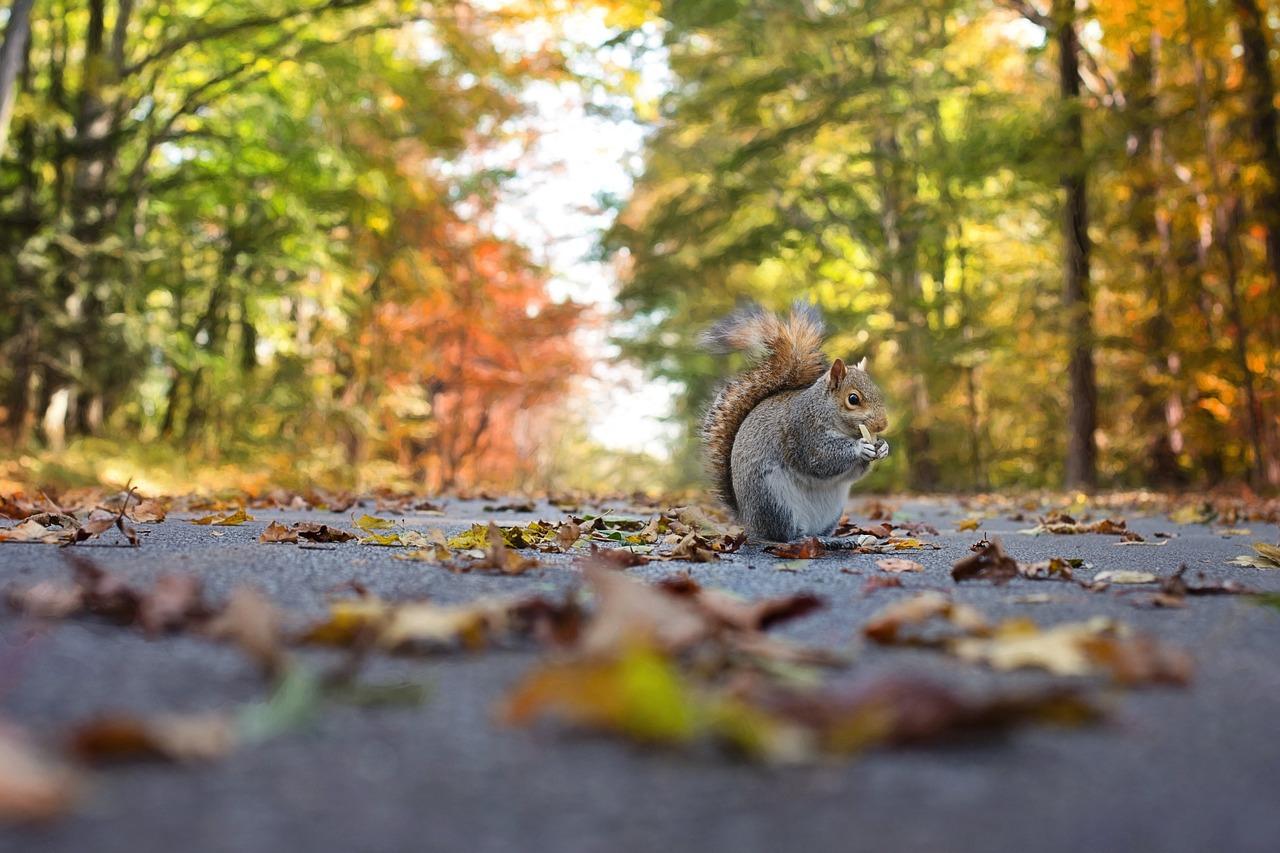 Souper d'automne Vincent de Paul